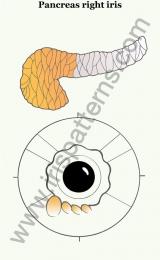 Pancreas right iris
